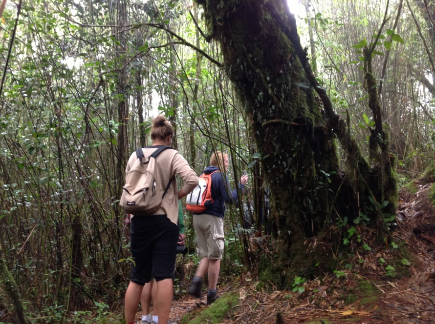 Hiking in the Tropics | East Coast Podiatry