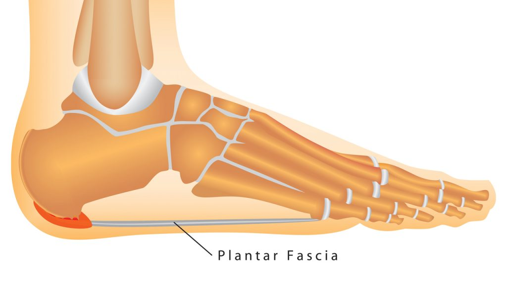 Plantar Fascia | East Coast Podiatry
