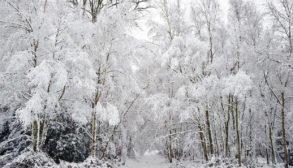 ECP   Winter 2018