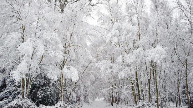 ECP | Winter 2018