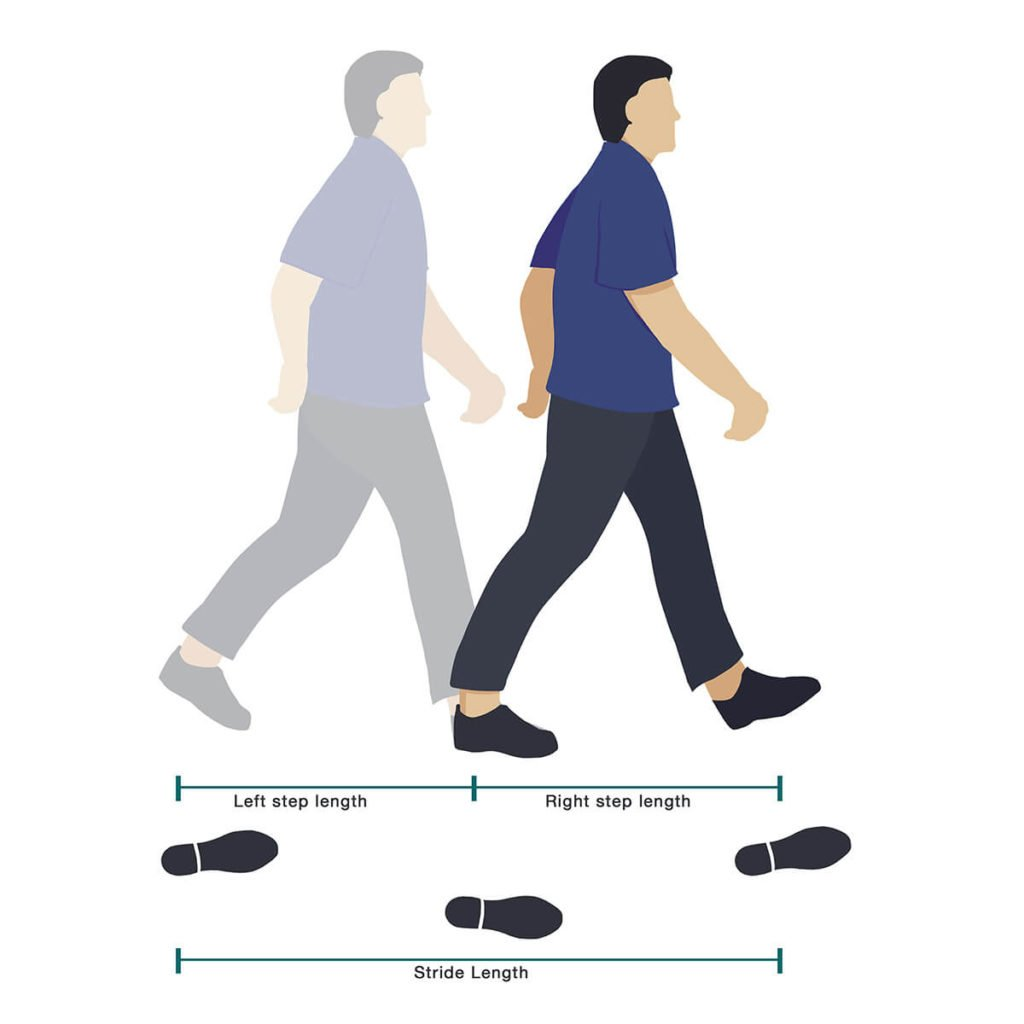 Stride Length of a human